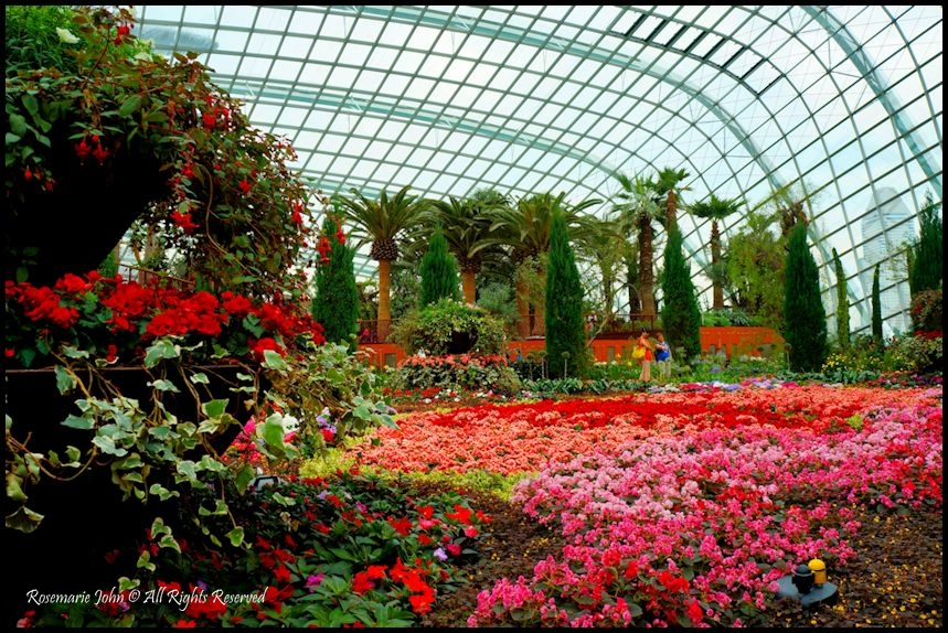 a - Garden By The Bay Flower