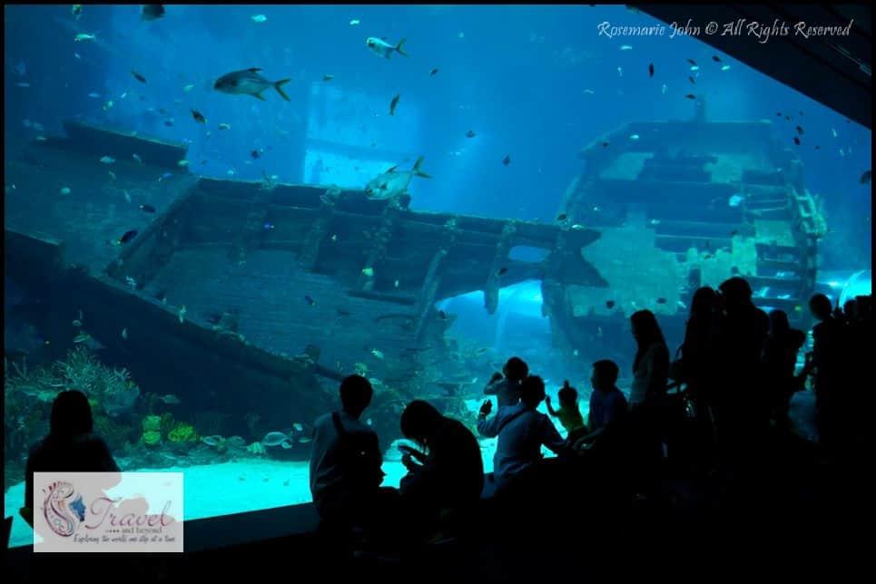 The s e a aquarium at marine life park resorts world sentosa