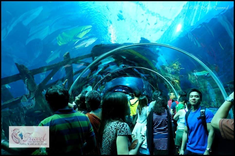 Aquarium2-RJohn