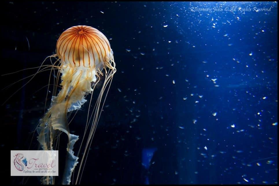 Aquarium4-RJohn