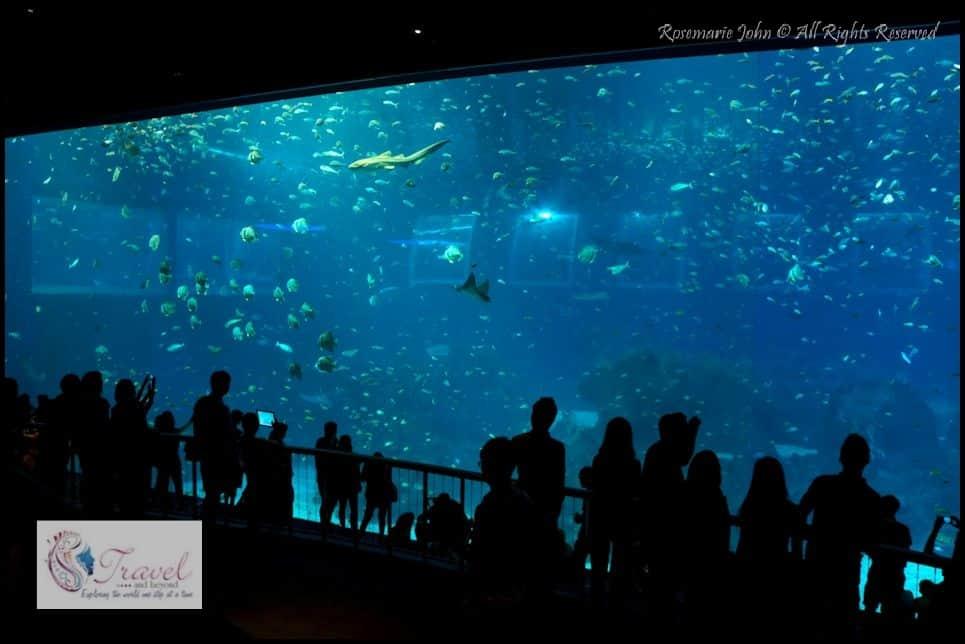 Aquarium5-RJohn