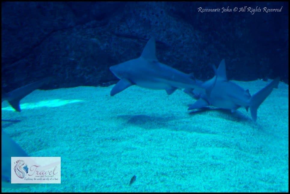Aquarium6-RJohn