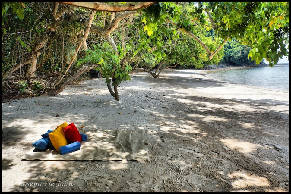 Our private picnic spot under the mangrove trees!