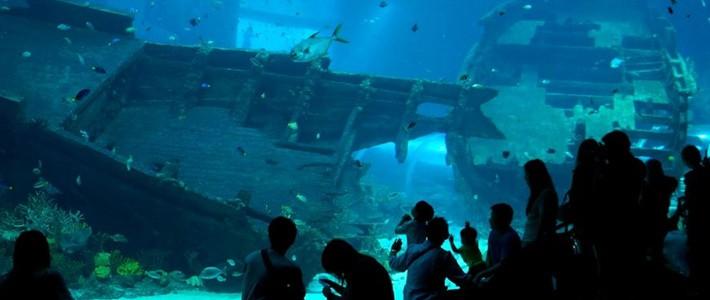 Thumbnail image for S.E.A Aquarium – The World's Largest Oceanarium