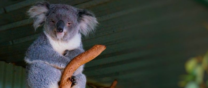 Thumbnail image for The Featherdale Wildlife Park in Doonside, NSW