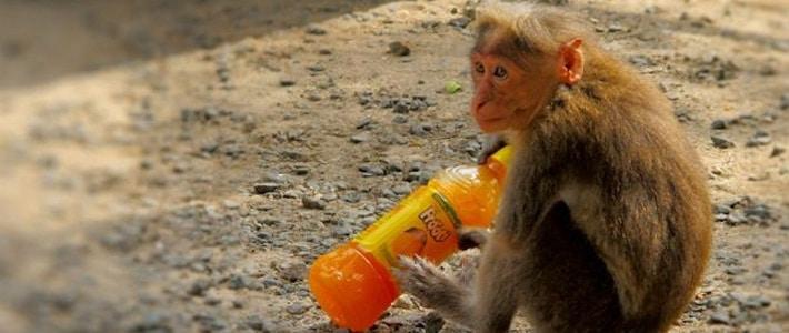 Thumbnail image for Monkey Business in Thekkady, Kerala