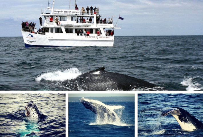 Photo Credit: Dolphin Watch Cruises Jervis Bay