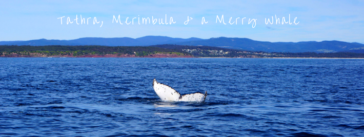Thumbnail image for Tathra , Merimbula and a Merry Whale